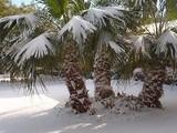 Чемпионат Мира под угрозой срыва. В Африке выпал снег