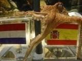 Испания – чемпион! Предсказал осьминог Пауль